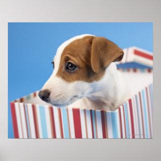 Cão em uma caixa de presente poster