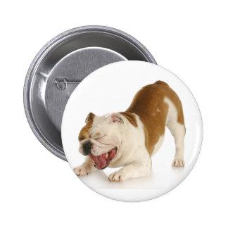 cão engraçado boton