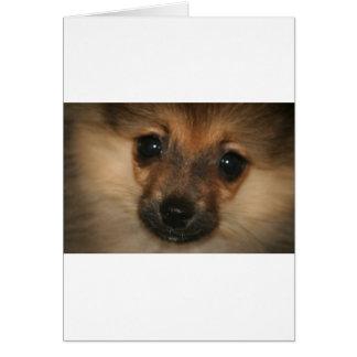 Cão fantasma cartão