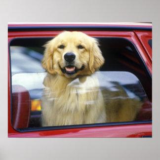 Cão na janela de carro vermelha poster