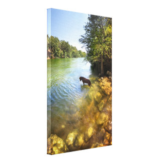 Cão no lago ladybird - Austin do centro Texas