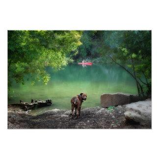 Cão no lago ladybird - Austin do centro Texas Impressão De Foto