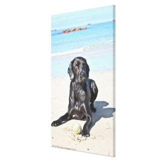Cão preto de Labrador que senta-se na praia Impressão Em Canvas