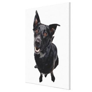 Cão preto impressão em tela