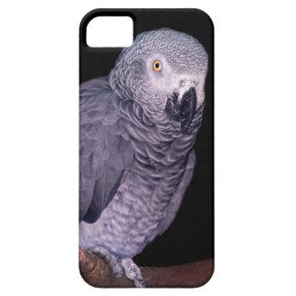 Capa Barely There Para iPhone 5 Caso do iPhone 5 do papagaio do cinza africano
