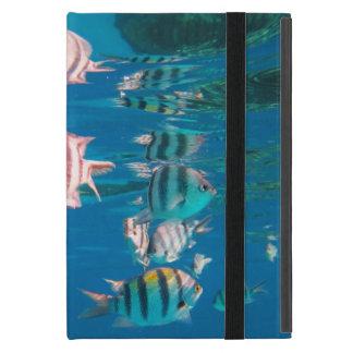 Capa iPad Mini Sargento major peixe