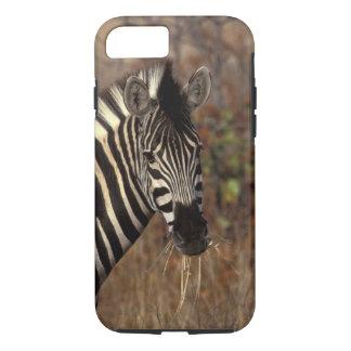 Capa iPhone 8/7 África, África do Sul, retrato da zebra de Kruger