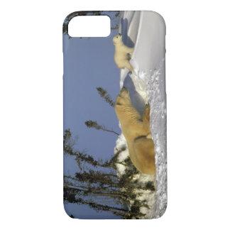 Capa iPhone 8/7 America do Norte, Canadá, Manitoba, Churchill. 5