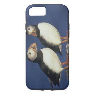 Capa iPhone 8/7 Arctica do papagaio-do-mar atlântico, do