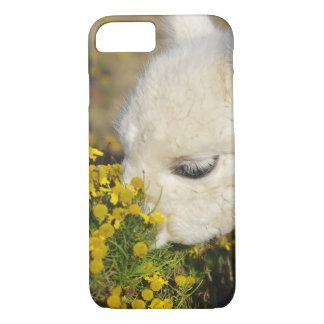 Capa iPhone 8/7 Caso do iPhone 7 da alpaca