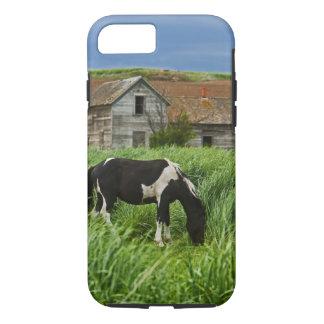 Capa iPhone 8/7 Cavalos da visão em um campo no Palouse 2