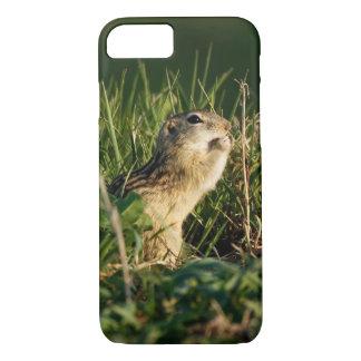 Capa iPhone 8/7 comer Treze-alinhado do esquilo à terra