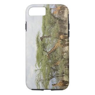 Capa iPhone 8/7 Kenya, reserva nacional de Samburu. Rothschild