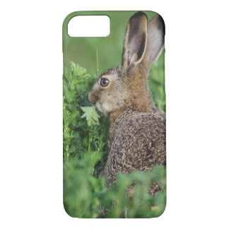 Capa iPhone 8/7 Lebre de Brown, europaeus do Lepus, comer novo,