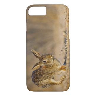 Capa iPhone 8/7 Lupulagem do coelho de coelho oriental