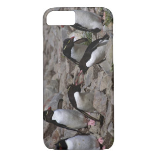 Capa iPhone 8/7 Oceano Atlântico, Ilhas Falkland. Rockhopper 2