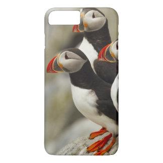 Capa iPhone 8 Plus/7 Plus Os papagaio-do-mar atlânticos em Machias selam a