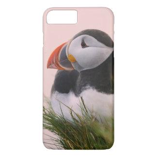 Capa iPhone 8 Plus/7 Plus Papagaio-do-mar atlântico (arctica do Fratercula)