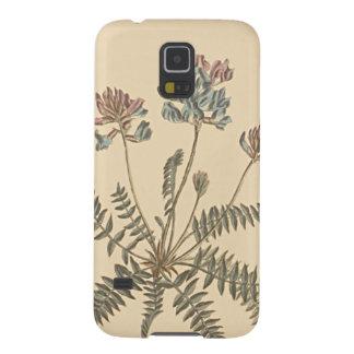 Capa Para Galaxy S5 Ilustração botânica de Milkvetch da montanha