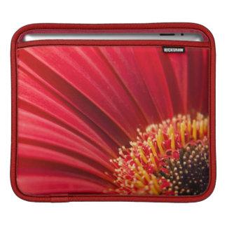 Capa Para iPad Flor macro vermelha da margarida do Gerbera
