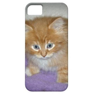 Capa Para iPhone 5 Ponto neste gatinho