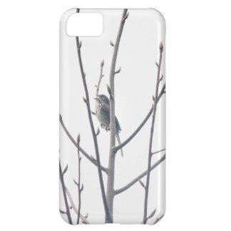 Capa Para iPhone 5C carriça do primavera do canto do caso do iPhone 5