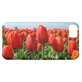 Capa Para iPhone 5C Caso do iphone 5 das tulipas do primavera vermelho