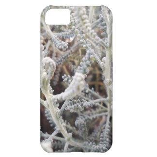 Capa Para iPhone 5C Chamaecyparissus do Santolina