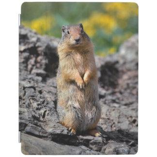 Capa Smart Para iPad Alerta do esquilo à terra para o perigo