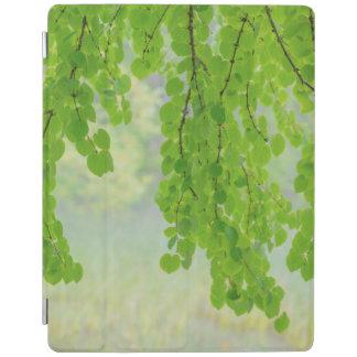 Capa Smart Para iPad Membros de árvore de Katsura na primavera |