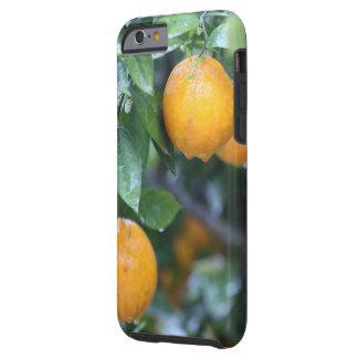 Capa Tough Para iPhone 6 Laranjas chuvosas 2