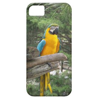 Capas de iphone azuis do Macaw