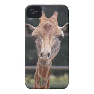 Capinha iPhone 4 Alimentação do girafa