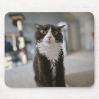 Cara engraçada do gato mouse pad