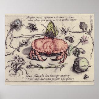 Caranguejo, Botanicals, insetos, e flores do vinta Posters
