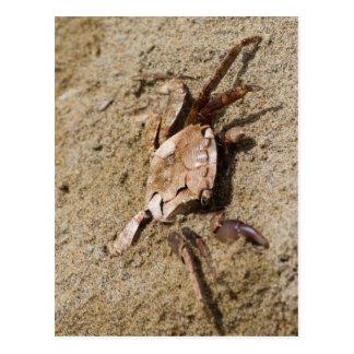 caranguejo na praia cartão postal
