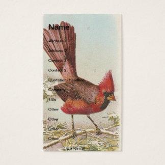 Cardeal do vintage cartão de visitas
