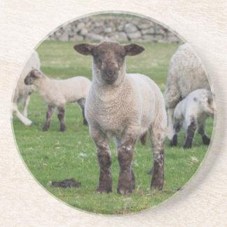 Carneiros 5 de Shetland Porta Copos De Arenito