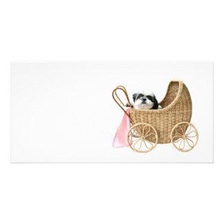 Carrinho de bebê de Shih Tzu Cartões Com Foto