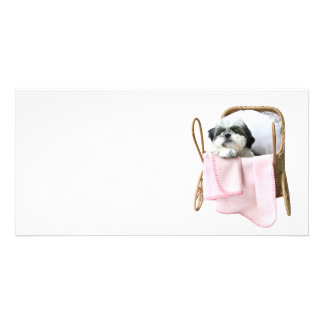 Carrinho de bebê de Shih Tzu Cartoes Com Fotos