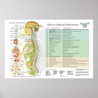 Carta da American National Standard dos nervos Póster