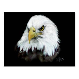 Cartão 2 da águia americana cartão postal