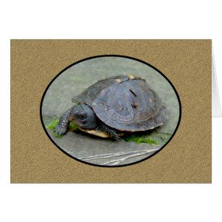 Cartão 2 da tartaruga do bebê