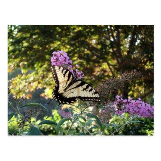Cartão #3 da borboleta cartão postal