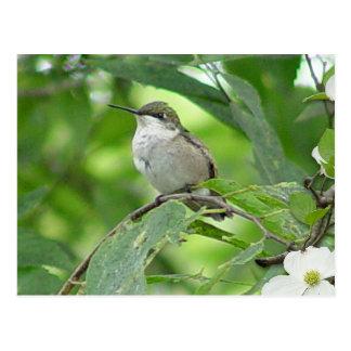 Cartão 4 do colibri cartão postal