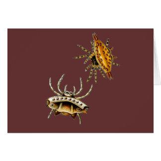 Cartão A aranha do caranguejo e o esfera-tecelão