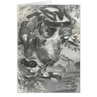 Cartão A.E. Brehm - tecelões de Neicourvi