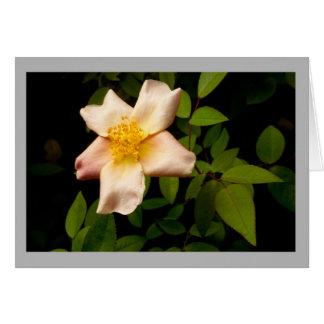 Cartão A herança amarela aumentou no jardim da primavera