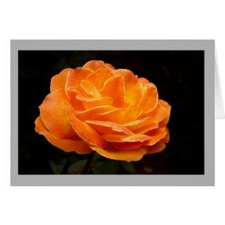 Cartão A laranja rica aumentou em um fundo escuro