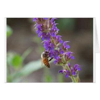 Cartão Abelha em Salvia